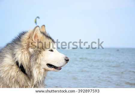 A dog on a kite beach