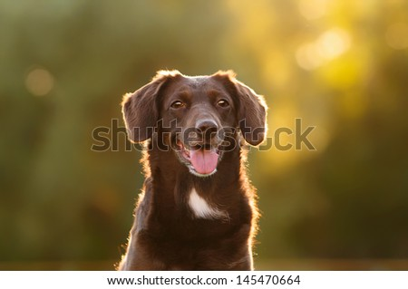 A dog on a summer outing - stock photo