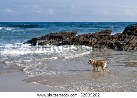 A dog playing with the waves
