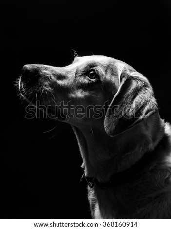 A dog portrait in low light
