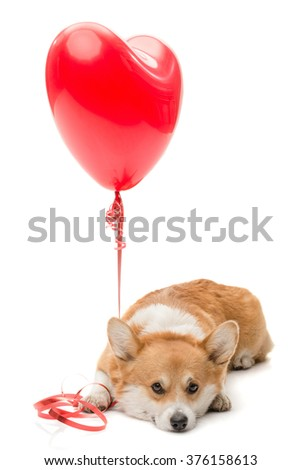 A dog pressing a red balloon to the floor with his paw