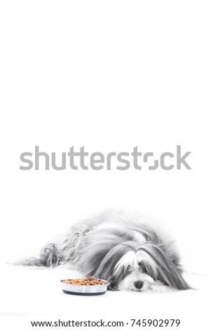 A dog refuses to eat his dinner on an isolated white vertical background.