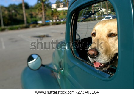a dog sat in the front seat of an American trusk, santa Barbara,california, USA. taken 15 /05/2006