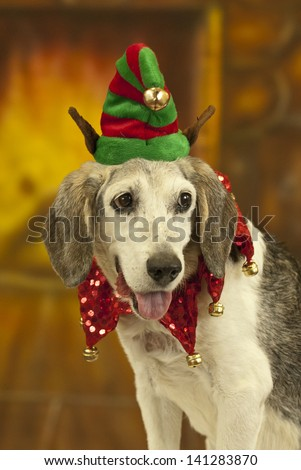 A dog sitting in front of fireplace wears a jester collar and elf hat