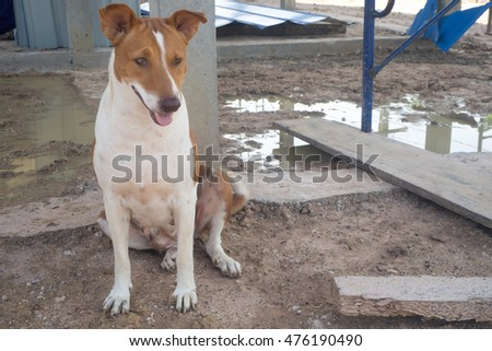 A dog sitting on ground at construction area.