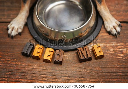 a dog waiting in front of a silver metal bowl for some food to be put in it for dinner time on a stained wooden patio or deck  - stock photo