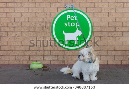 A dog waiting outside superstore