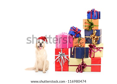 A dog wearing a christmas hat and pile of gifts isolated on white background - stock photo