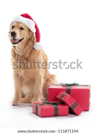 A dog wearing a Santa hat, surrounded by Christmas presents on a white background. - stock photo