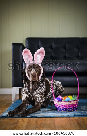 A dog wearing bunny ears. - stock photo