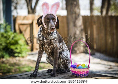 A dog wearing bunny ears. - stock photo