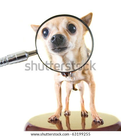 a dog with a magnifying glass - stock photo