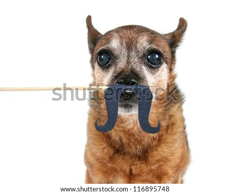 a dog with a mustache on a stick  (from the mustache series) - stock photo