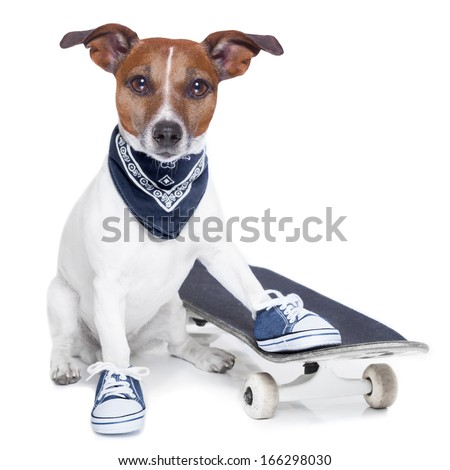 a dog with skateboard wearing  blue sneakers