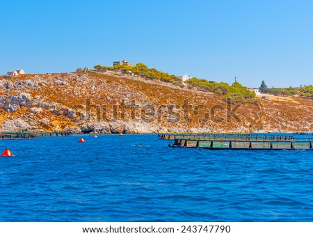 a dolphin around a fishing farm out of Vathi village in Kalymnos island in Greece - stock photo