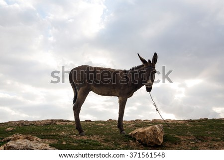 A donkey in Israeli mountains in spring - stock photo