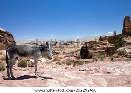 A Donkey stands in front of the ancient ruins of Petra, Jordan - stock photo