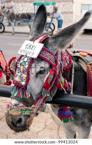 a donkey with a taxi sign on its head - stock photo