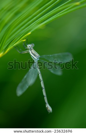 A dragon fly hangs from a palm frond.
