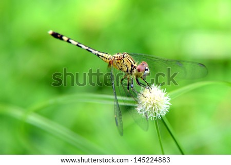 A dragonfly on grass.