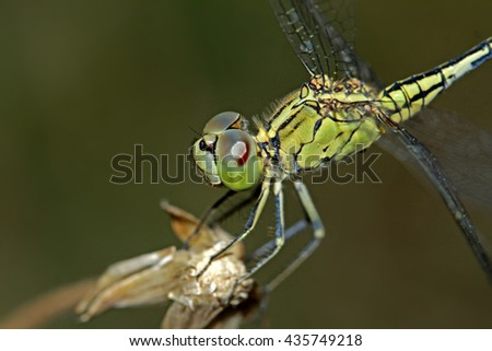 A dragonfly on grass flower