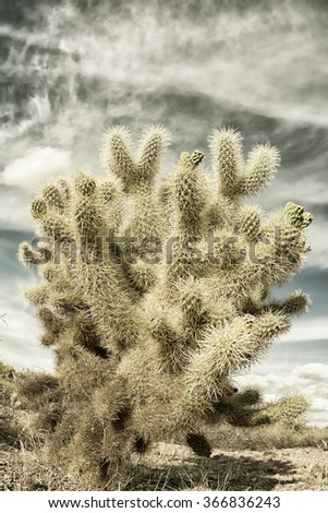 A dramatic image of the Superstition desert in Arizona shows the rugged detail of a dry wilderness with a sharp cholla cactus and beautifully textured sky