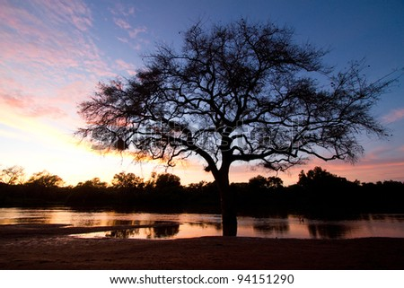 A dramatic silhouette of a tree next to the Limpopo River