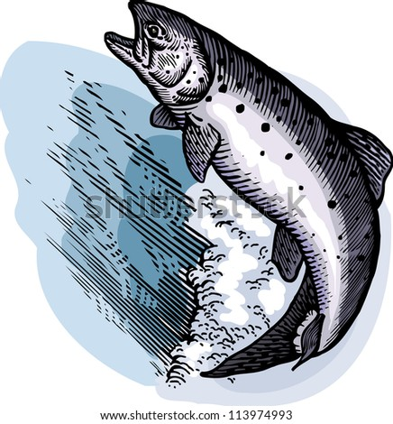 A drawing of a leaping salmon