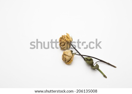 A dried rose depicted on a white background. - stock photo