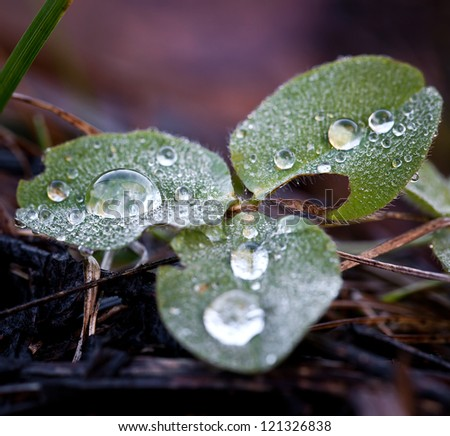 A drop of fresh dew on leaves