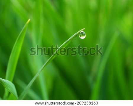 a drop of water on the tip of grass, as a background - stock photo