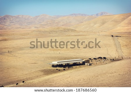A drought leaves the grass dry and brown out in a farm field in central California. Selective focus falls on the cattle feeding under the shaded building.  - stock photo