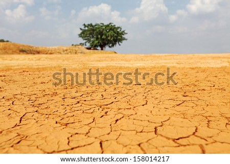 A drought stricken landscape of cracking earth surface.