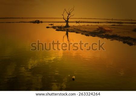 A dry tree with teak bridge U bein. Mandalay, Myanmar - stock photo