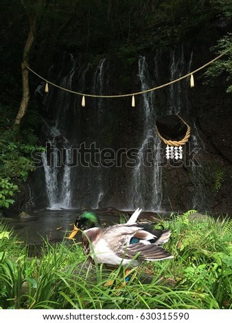 A duck in the grass in front of a waterfall in Hakone, Japan