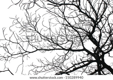 A dying tree - stock photo