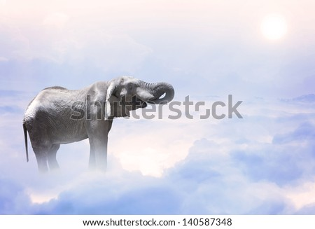 A elephant standing on the mystic clouds - stock photo