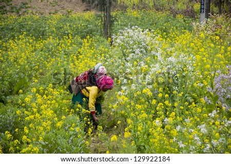 A ethnic woman with her son is picking up flower in rapeseed garden in Hagiang province, Vietnam - stock photo