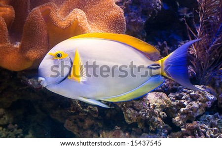 a exotic tropical fish in a aquarium