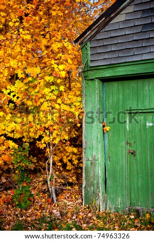 A faded green shed is surrounded by beautiful golden colored fall foliage in Massachusetts.