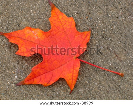 a fall leaf with vivid colors - stock photo