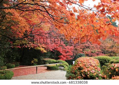 a fall season of shisen do garden kyoto
