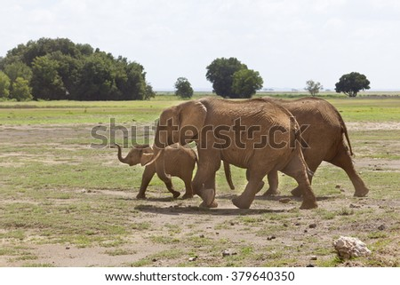 A family of African Elephants in Amboseli National Park in Kenya.