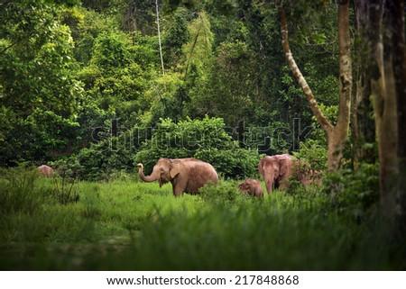 A family of Elephant - stock photo
