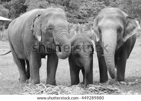 A family of elephants at the Elephant Nature Park, Chiang Mai, Thailand.