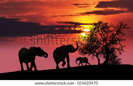 A family of elephants sunset silhouette