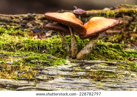 A family of mushrooms and moss grow on a rotting log in the forest.