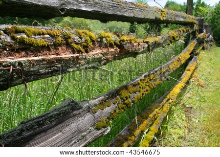 A farm fence covered in moss.