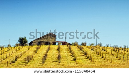 A Farm on top of the hill vith vineyard