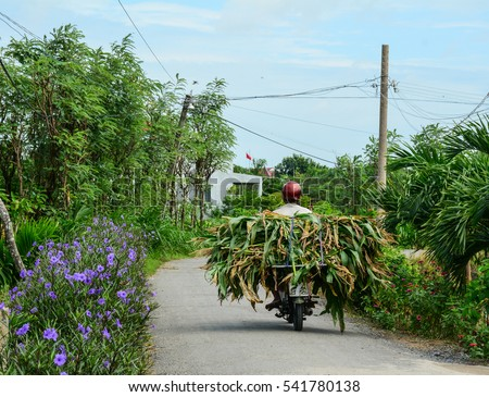 A farmer carrying grass by motorbike on countryside road in Mekong Delta, Vietnam. The Mekong Delta is also Vietnam's most important economy region.